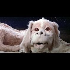 """Falkor; every child of the 80's dream pet (Forget it, I am a grown woman and I think Falkor would make the perfect companion, I wouldn't him as a """"pet"""" He should be able to go and come as he pleases!)"""