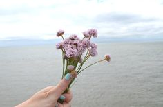 Sea Thrift | The Cardiff Cwtch
