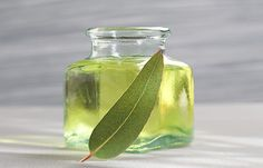 Eucalyptus oil is extracted from Eucalyptus globulus and the related sub-species. Eucalyptus Oil For Skin, Eucalyptus Globulus, Eucalyptus Essential Oil, Natural Essential Oils, Gum Health, Hair Health, Herbal Remedies, Home Remedies, Limpieza Natural