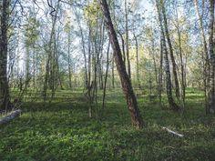 #trunk #wood #fair_weather #daylight #branch # #lush #leaf #dawn #park #tree #tbt #russian #instagood #sun #nature #follow #beautiful #environment #igers #lesagul #season #scenic #flora #россия #landscape #outdoors #scenery