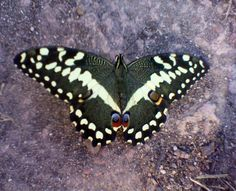 butterfly in a park in Claremont, Cape Town
