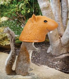 Fill this Big Head Squirrel Feeder with peanuts or corn, then sit back and giggle as squirrels stick their heads up inside for a snack!