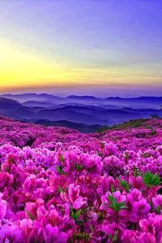Ideas beautiful nature photography flowers scenery for 2019 Mother Earth, Mother Nature, Beautiful World, Beautiful Places, Amazing Places, Jolie Photo, Amazing Nature, Pretty Pictures, Flower Pictures