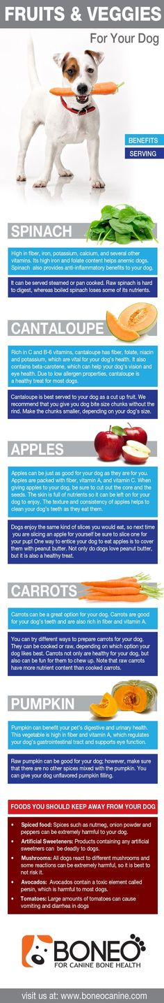 Healthy fruits and vegetables to give to your dog. #dogs #healthy