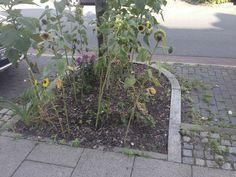 Hier mal Bremen Urban Gardening, Plants, Bremen, Flora, Apartment Gardening, Plant, Urban Homesteading