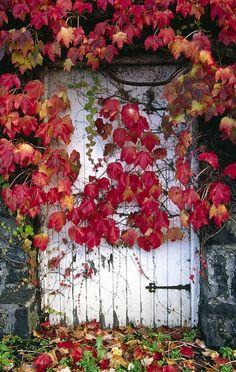 the beauty of autumn ..