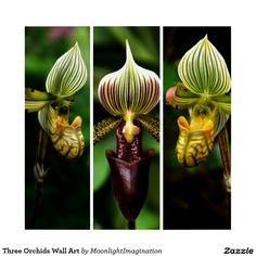 Three Orchids Wall Art Triptych