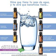 My Doterra, Doterra Blends, Doterra Essential Oils, Essential Oil Blends, Zendocrine Doterra, Esential Oils, Doterra Recipes, Natural Oils, Google