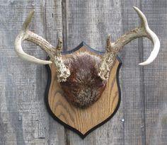 Vintage Mounted Deer Antlers and Fur on Oak by lakesidecottage, $69.00