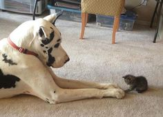 Friends come in all shapes and sizes! #cute
