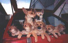 A Sorta Fairytale: Molly The Carolina Dog (American Dingo!)http://www.asortafairytale.com/