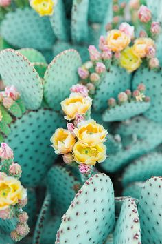 Bunny Ears Prickly Pear Cactus II Art Print by Leah Hope Photography - X-Small Cactus Photography, Photography Store, Photography Poses, Spring Photography, Nature Photography, Nature Aesthetic, Flower Aesthetic, Aesthetic Drawing, Aesthetic Vintage