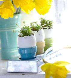 Love this idea with the mini pots. Would be nice and easy to just plant grass in these.