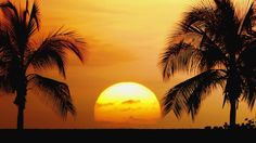 Palm Tree Beach Sunset | Browse Wallpapers Tropical Beaches Beautiful Palm Trees Sunrise Sunset ...