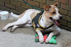 Havre de Grace Woman Drives 1,600 Miles to Save Dogs