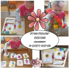 Spring is a great time to learn flower names. This post has a free printable for cards as well as a matching mat and corresponding cards. Seeds Preschool, Preschool Age, Flower Activities For Kids, Spring Activities, Montessori Activities, Science Activities, Flower Names, Matching Cards, Wise Owl