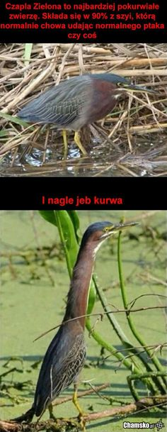 You Know What The Green Heron Is. Search for Fun - Funny Clone Funny Memes, Funny Pics, Funny Pictures, Pictures 2018 You Know What The Green Heron Cute Funny Animals, Funny Cute, The Funny, Funny Work, All Meme, Doja Cat, Funny Tumblr Posts, Stupid Funny, Funny Stuff