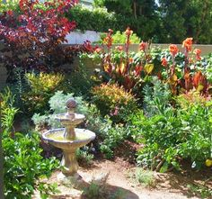 drought tolerant landscape Drought tolerant landscaping