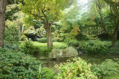 maple-trees-japan-autumn