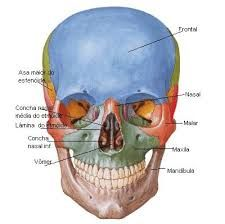 Resultado de imagem para fotos de cranio humano