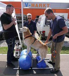 Eine Poolparty für Hunde - Nachrichten Mindelheim - Augsburger Allgemeine