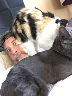 This man drowning in cat. | Just 19 Really, Really Cute Pictures Of Cats