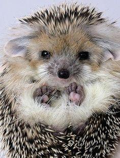 Magical Nature Tour, Hedgehog by Vitas Cerniauskas :)