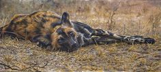 A gallery of fine art oil ,watercolour paintings of wildlife,birds & portrait works . Huge range of Greeting cards in several sizes of the natural world . African Wild Dog, Devon Uk, Wild Dogs, Wildlife Art, Natural World, Art Oil, Animal Photography, Watercolor Paintings, Fine Art
