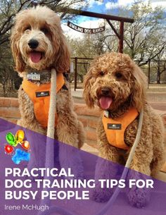 dog learning,dog tips,dog care,teach your dog,dog training Puppy Training Guide, Therapy Dog Training, Dog Training Books, Best Dog Training, Therapy Dogs, Training Schedule, Training Videos, Dog Care Tips, Pet Care