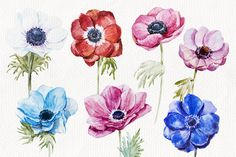 I am pleased to introduce you a watercolor flower anemones set. In this set you get: 2 seamless patterns (JPG , 2 floral composition and 7 watercolor Watercolor Lettering, Watercolor Artists, Watercolor Flowers, Watercolour, Flower Line Drawings, Flower Sketches, Anemone Flower, Flower Art, Botanical Art