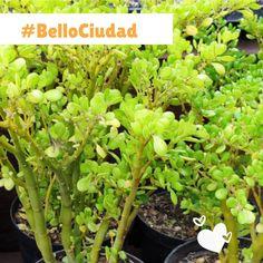 """1 Me gusta, 2 comentarios - Néstor A León R (@nestoraleonr) en Instagram: """"Multiplex expresiones de vida en una única rama, en un único tronco, en una única raíz. Cada parte…"""" Ramen, Celery, Vegetables, Plants, Instagram, Cities, Vegetable Recipes, Plant, Veggies"""