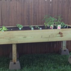 Above ground garden (garden box raised herbs)