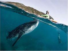 Amazing Underwater Stock Photography Pictures Of Sea Creatures