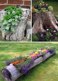 Flowering log