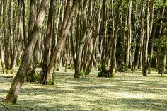 Geheimnisvoller Grumsiner Forst