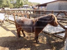"""Pony"" by - Mostphotos Pony, Horses, Animals, Pony Horse, Animales, Animaux, Ponies, Animal, Animais"