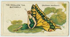 The swallow tail butterfly. - This is the first of a series of 50 butterfly lady cigarette cards.