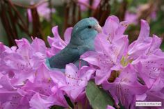 Parrotlet resting in some flowers. Pacific Parrotlet, Parakeet, Parrots, Bird Feathers, Beautiful Birds, Places To Go, Mountain, Creatures, Gardens