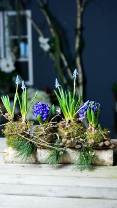 Spring, Plants, Flowers, Branches, Autumn Decorations, Candle Holders, Beautiful Homes, Plant, Planets