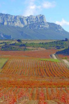 Ruta del vino de Rioja Alavesa.  Spain