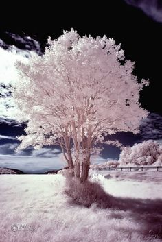 G A W Photography, Infrared ~ SONY DSC