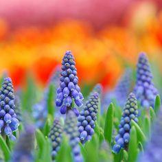 takaclip: Flowery svět (o neomezené inspirace)