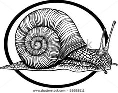 Cartoon Snail Vector Illustration - 178001813 : Shutterstock