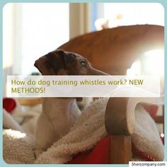 Training your puppy is centered on building your relationship with your canine as well as setting up boundaries. Be firm but consistent and you'll notice amazing results when it comes to your dog training efforts. Dog Training Books, Dog Training Classes, Dog Training Techniques, Brain Training, Dog Training Tips, Potty Training, Training Online, Training Schedule, Dog Minding