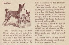 Barkless dog