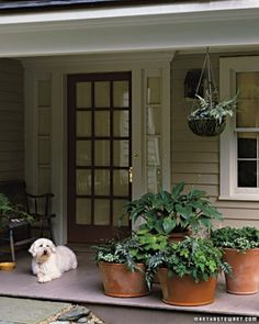 Shaded porch container garden -   cluster potted plants, add a hanging plant or two.