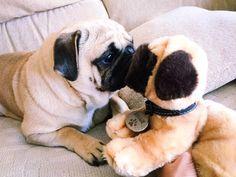 Puppy pug coco toy