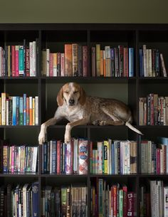 Cats aren't the only animals that like books. --  Maddie on Books, from Maddie on Things: A Super Serious Project about Dogs and Physics by Theron Humphrey