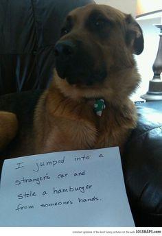 """Lolsnaps.com - """"I Regret Nothing"""" -Dog"""