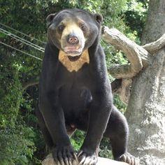 福岡市動物園ブログ: こどもの日の動物園♪そして立夏
